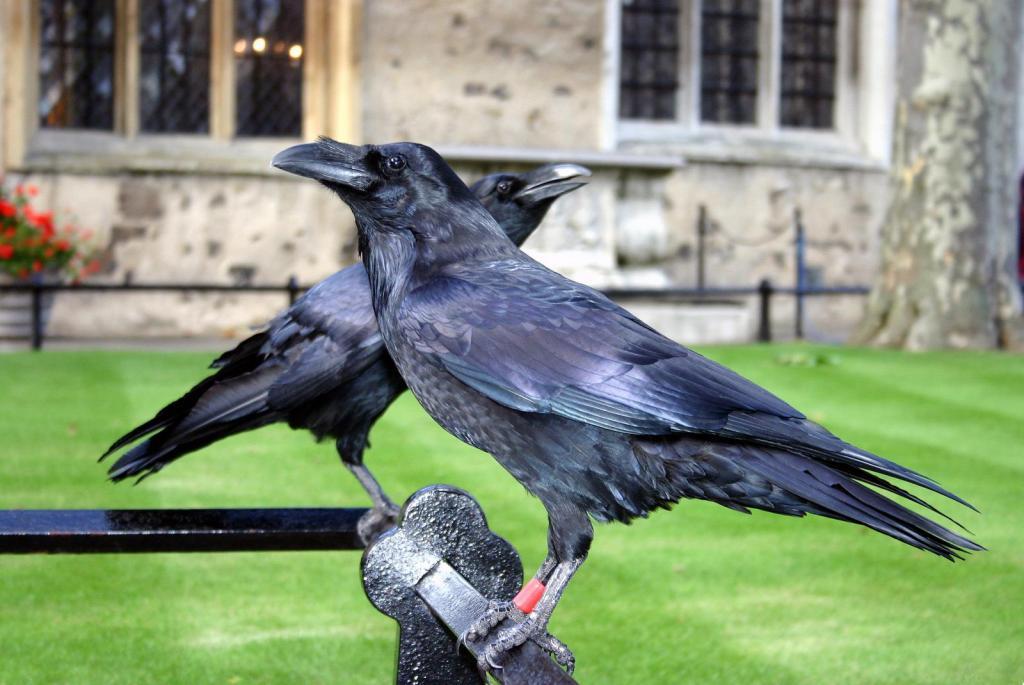 Die Raben vom Tower of London