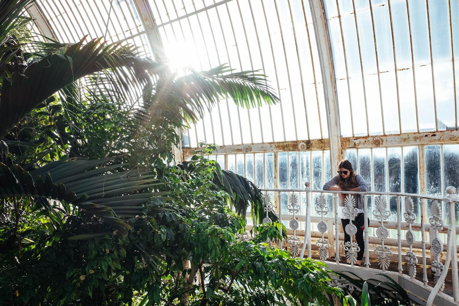 Palm House in Kew Gardens, London