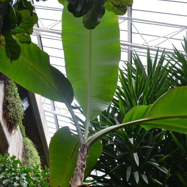 Barbican Conservatory – Eine Oase in der Betonwüste