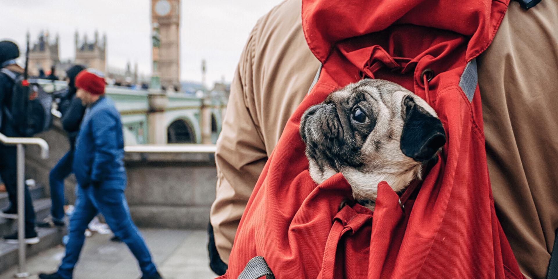 London Mit Hund Einreise Hotels Aktivitaten Loving London 2021